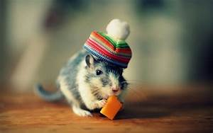 Download, Cute, Mouse, Funny, Image