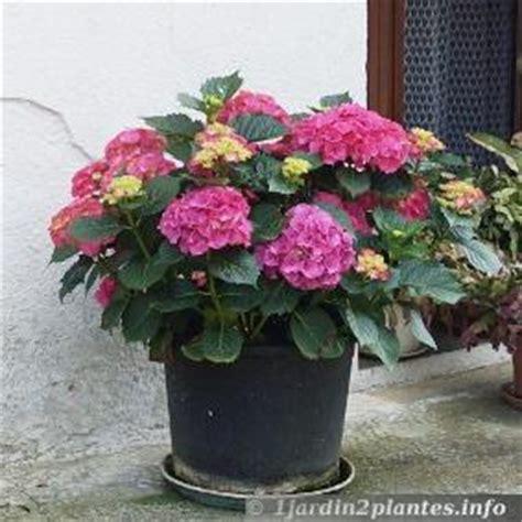 un arbuste 224 fleurs l hortensia 192 lire
