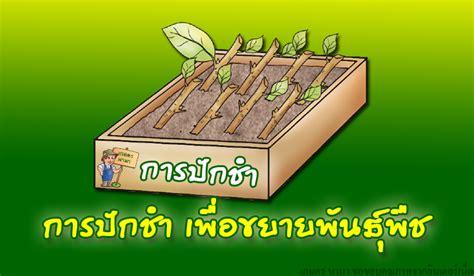 การปักชำ เพื่อขยายพันธุ์พืช - เกษตร นานา