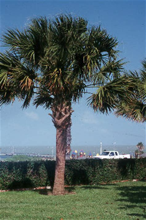 outstanding coastal planats