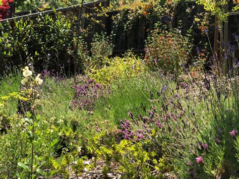 santa clara master gardeners attractor plants protect your garden from bad bugs uc