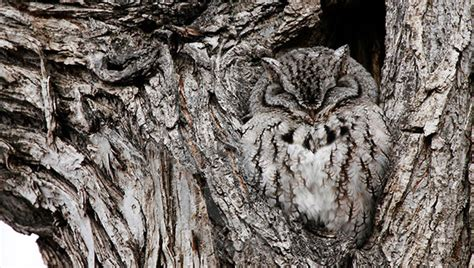 brilliant examples  owl camouflage instantshift