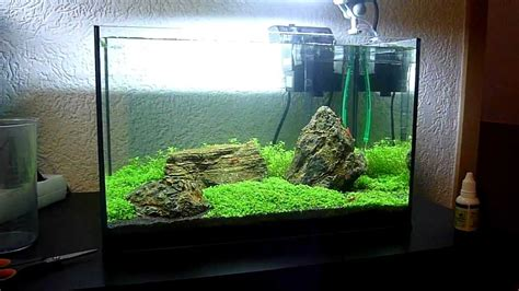 iwagumi aquascape my 25l iwagumi aquascape