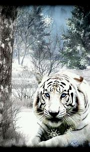 Beautiful White Tiger   Wild cats, Beautiful cats, Unusual ...