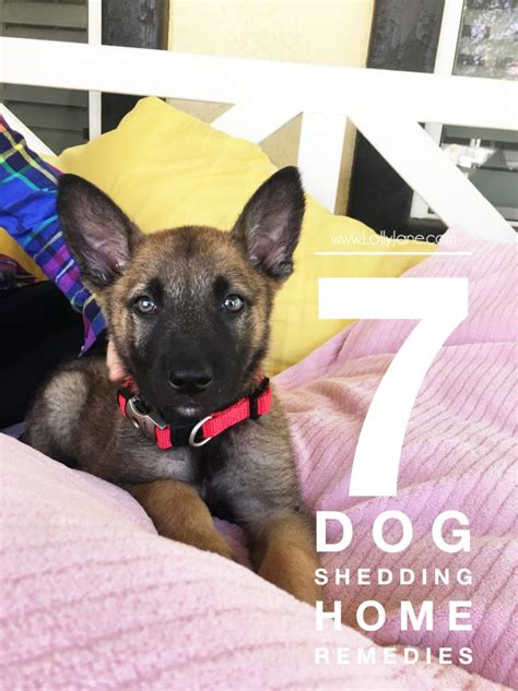 Home Remedies For Shedding Dogs 7 shedding home remedies lolly
