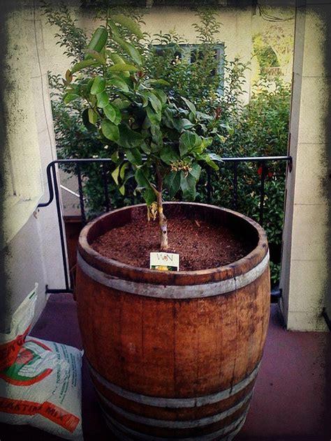 atjanelle okamoto    grandpa lemon trees  wine