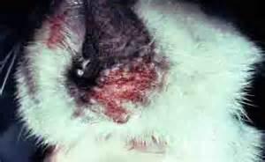 severe cat allergies cat allergy symptoms pictures causes descriptions and