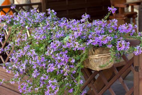 Pflanzen Für Die Sonne by Bildergalerie H 228 Ngeel Pflanzen F 252 R Die Sonne