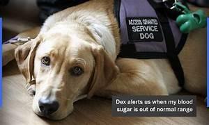 diabetic alert dogs