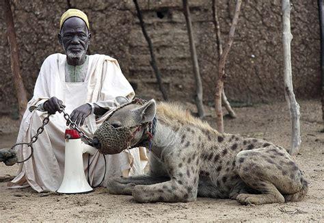 Tile Bong Da C1 by The Troll Dens Hyena Pets
