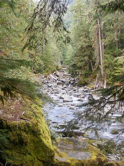 Olympic Staircase National Park Trail Rapids Visit
