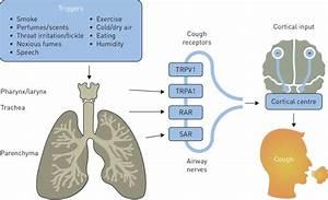 Pathophysiology Of Cough  Trpv1  Transient Receptor