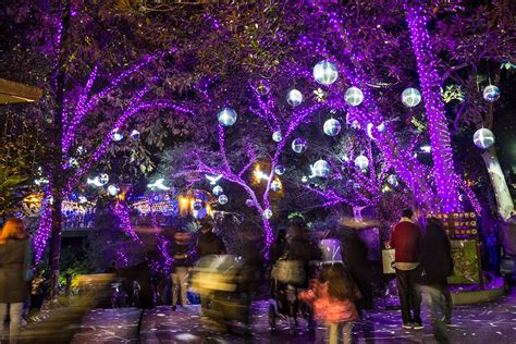 la zoo lights things to do in and around los angeles time out los angeles
