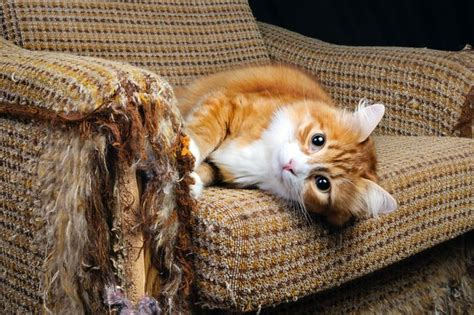 cat clawing furniture how to keep scratch happy cats furniture mnn 2015