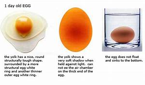 Farm Fresh Eggs And How To Tell When They U0026 39 Re Not