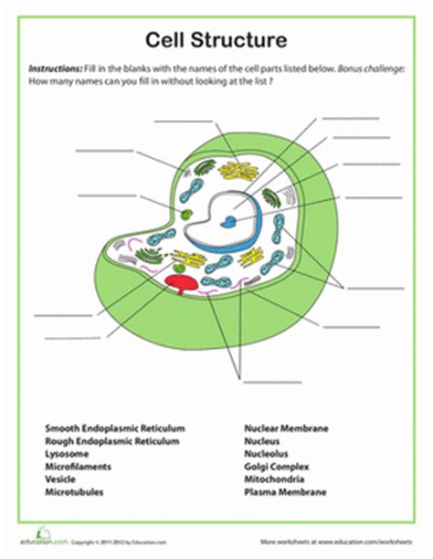 cell structure worksheet 7th grade school science