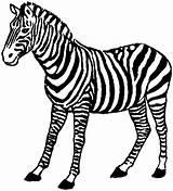 Zebra Coloring Animals Standing Wildlife sketch template
