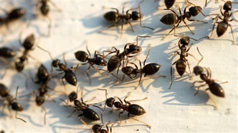 Ameisen Bekämpfen Egarden
