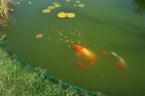 poisson port vendres poisson 224 vendre trendyyy