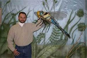 Dragonflies | Wildlife and Nature