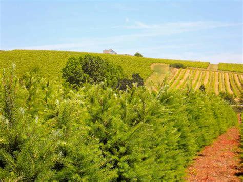 christmas tree farm redland oregon tree farm property for sale in oregon