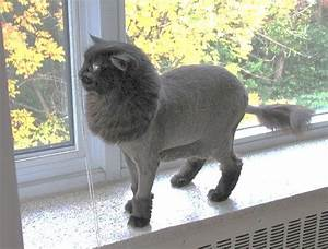 58 best images about Cat grooming on Pinterest | Persian ...