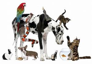 different animals together in a pets picture Quotes