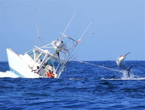 Deep Sea Fishing Bermuda Party Boat by Marlin Vs Man Kirby Fukunaga Blog