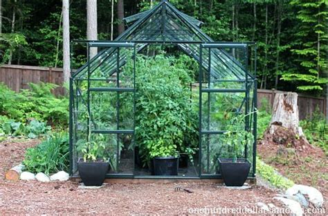 14696 Herbs Of Mexico Coupon by How To Grow Food In A Greenhouse Tomatoes Peppers