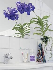 Orchidee Vanda Pflege : vanda div farben l florastore ~ Lizthompson.info Haus und Dekorationen