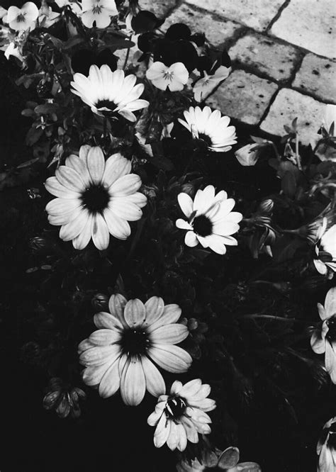 Black And White Hd Wallpapers Imagenes Tumblr Flowers Hd Wallpapers Hd Backgrounds Tumblr Backgrounds Images Pictures