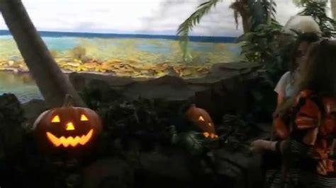 Shark Encounter Seaworld Sandiego Youtube