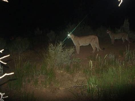 animals zion national park  national park service
