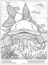 Coloring River Pages Catfish Fish Freshwater Mississippi Getcolorings Habitat Printable Ocean Getdrawings sketch template