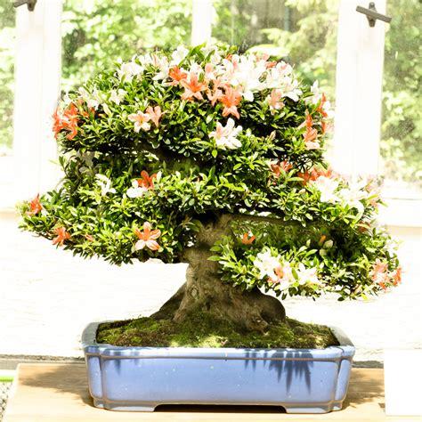 Botanischer Garten München Veranstaltungen by Bonsaiausstellung Im Botanischen Garten M 252 Nchen