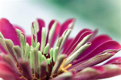 pink green flower photo photoatbstrakt