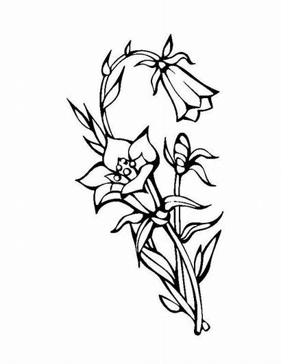 Coloring Flower Lily Blooming Flowers