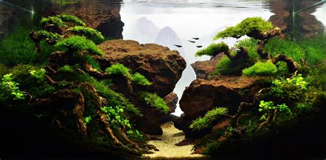 Aquascape Ideas by Aquascape The Of The Inside Water Garden