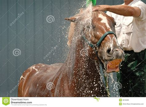 equine shower shower stock image image of water groom