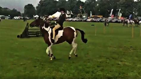 horse his protects senses danger hurdle himself rider smart
