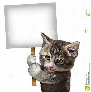 Cat Holding Sign stock illustration. Image of health ...