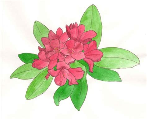 how to draw a rhododendron new how to draw a rhododendron flower draw