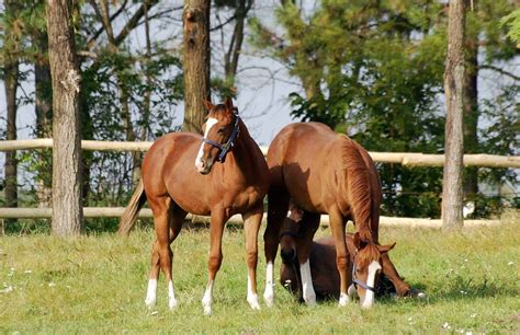 young horses horse managing performance mind future care baby health