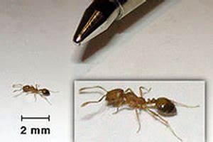 Ants | Economy Pest Control