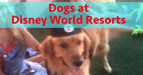 lets talk dogs disney world resorts