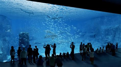 aquarium megastructure nausicaa  europes largest