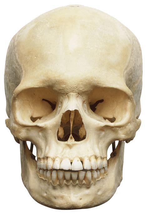 elderly skull png transparent image   icons