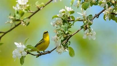Bird Birds Trees Yellow Wallpapers Flower Branch