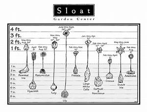 Flowering Bulbs Chart
