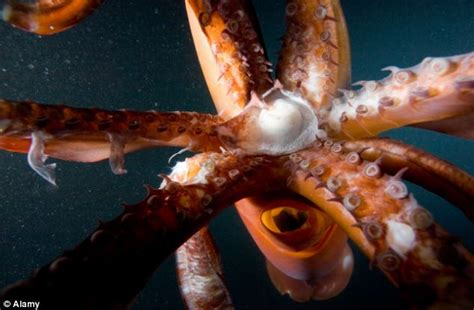 Humans Could Have Flexible Skeletons Tentacles And Even